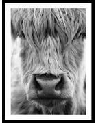 Tiere BILD  - Schwarz/Weiß, Natur, Holzwerkstoff (30/40cm)