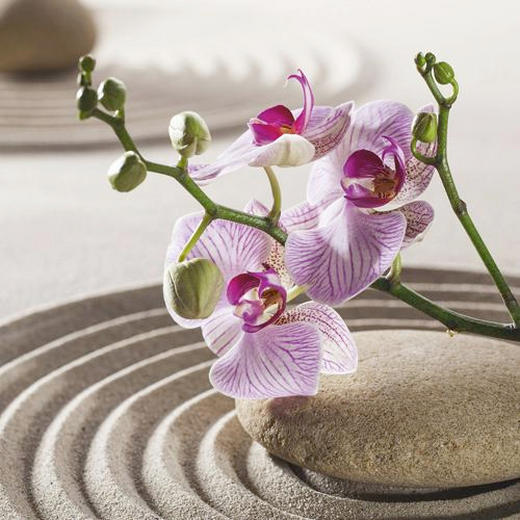 Orchideen, Zen GLASBILD - Multicolor, LIFESTYLE, Glas (30/30/2cm) - Eurographics
