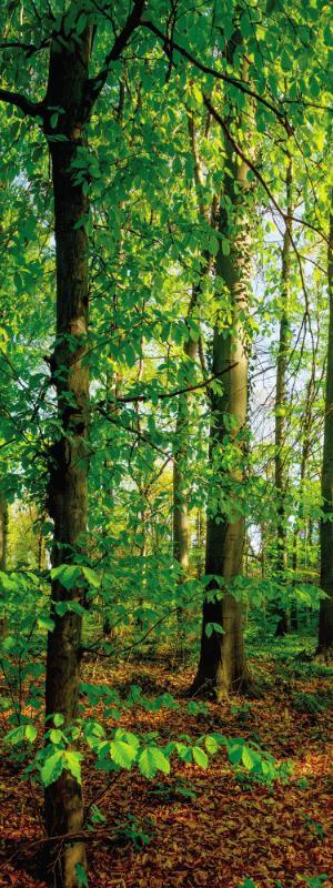 Bäume KEILRAHMENBILD - Multicolor, KONVENTIONELL, Holz/Papier (30/80/3cm)