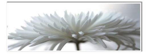 Blumen KEILRAHMENBILD Crysantheme - Weiß, Design, Textil (60/180cm) - Wiedemann