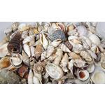 Streudeko Muschelmix - Naturfarben, Basics, Naturmaterialien (6,5/16/6,5cm) - Ambia Home