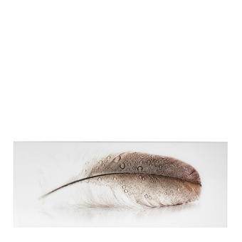 Zeichnung GLASBILD - Braun/Weiß, Design, Glas (125/50cm)