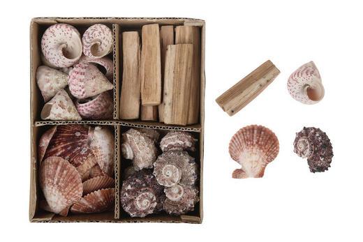 Deko Muschel Set - Naturfarben, Trend, Holz (20/17/6cm)