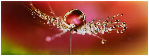 GLASBILD - Multicolor, KONVENTIONELL, Glas (30/80cm) - Eurographics