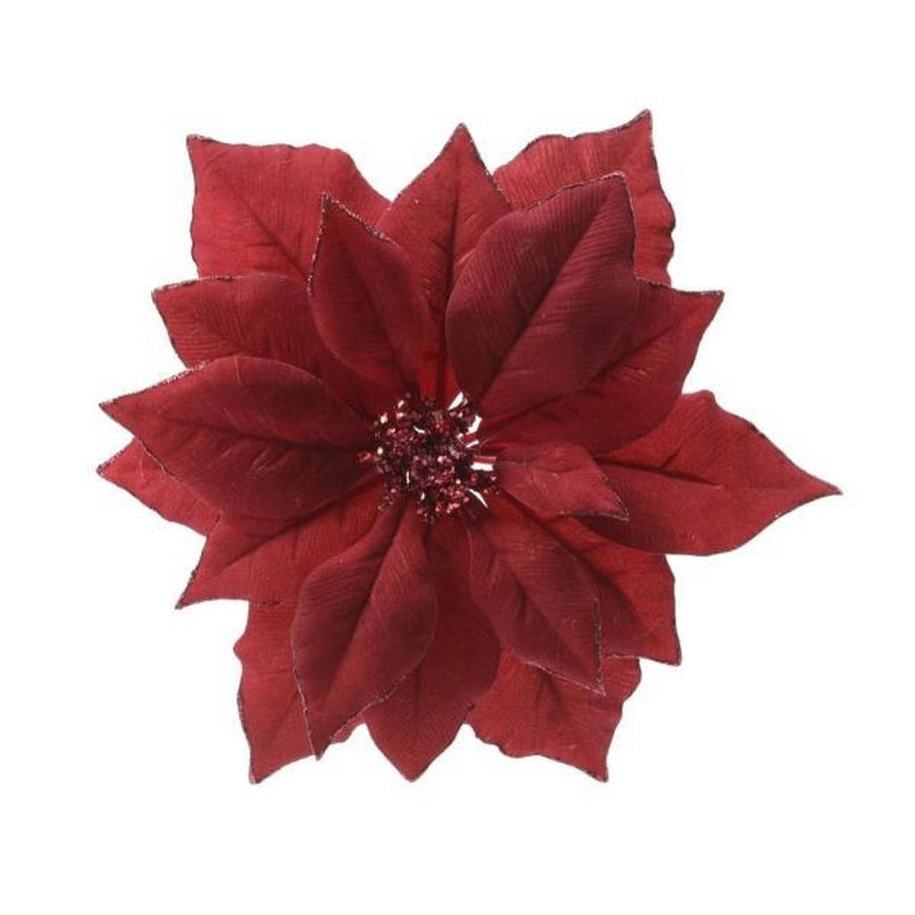 Weihnachtsstern-Blüte