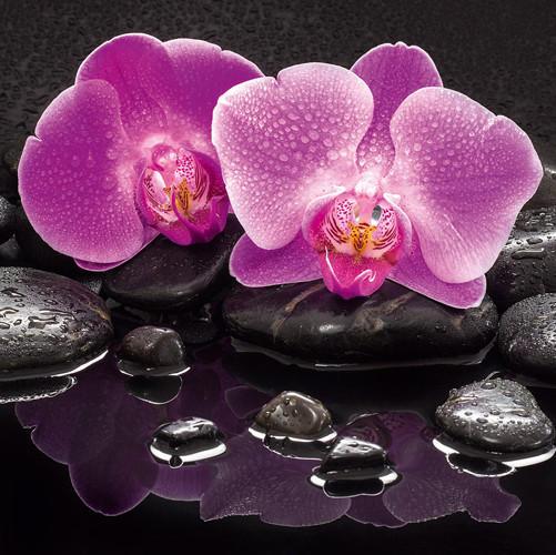 Blumen, Orchideen, Steine, Wasser Glasbild