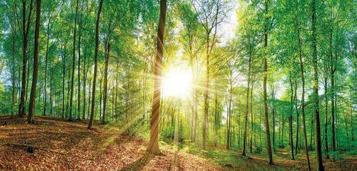 Bäume KEILRAHMENBILD - Multicolor, KONVENTIONELL, Holz/Papier (115/55/3cm)