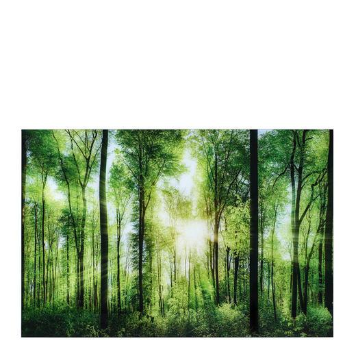 Bäume GLASBILD - Multicolor, Design, Glas (80/120cm) - Monee