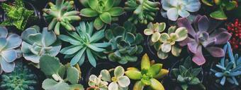 Pflanzen GLASBILD - Multicolor, Trend, Glas (80/30/2cm) - Eurographics