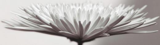 Blumen Acrylglasbild Cuchy Cloud - Multicolor, Design, Kunststoff (50/180cm) - Eurographics