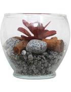 DEKOPFLANZE - Multicolor, Basics, Glas/Naturmaterialien (13,5/11,7cm) - Ambia Home
