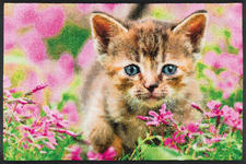 FUßMATTE 50/75 cm Katze Grün, Multicolor, Rosa - Multicolor/Rosa, Basics, Kunststoff/Textil (50/75cm) - Esposa