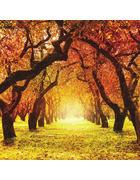 OBRAZ SKLENĚNÝ, stromy, 30/30/1,40 cm - vícebarevná, Natur, sklo (30/30/1,40cm)