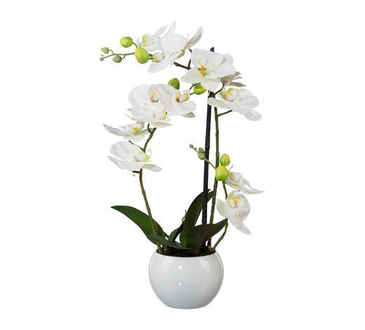 KUNSTBLUME Orchidee  - Dunkelgrün/Weiß, Kunststoff (42cm)