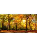 DEKOPANEEL - Multicolor, Natur (100/50cm)