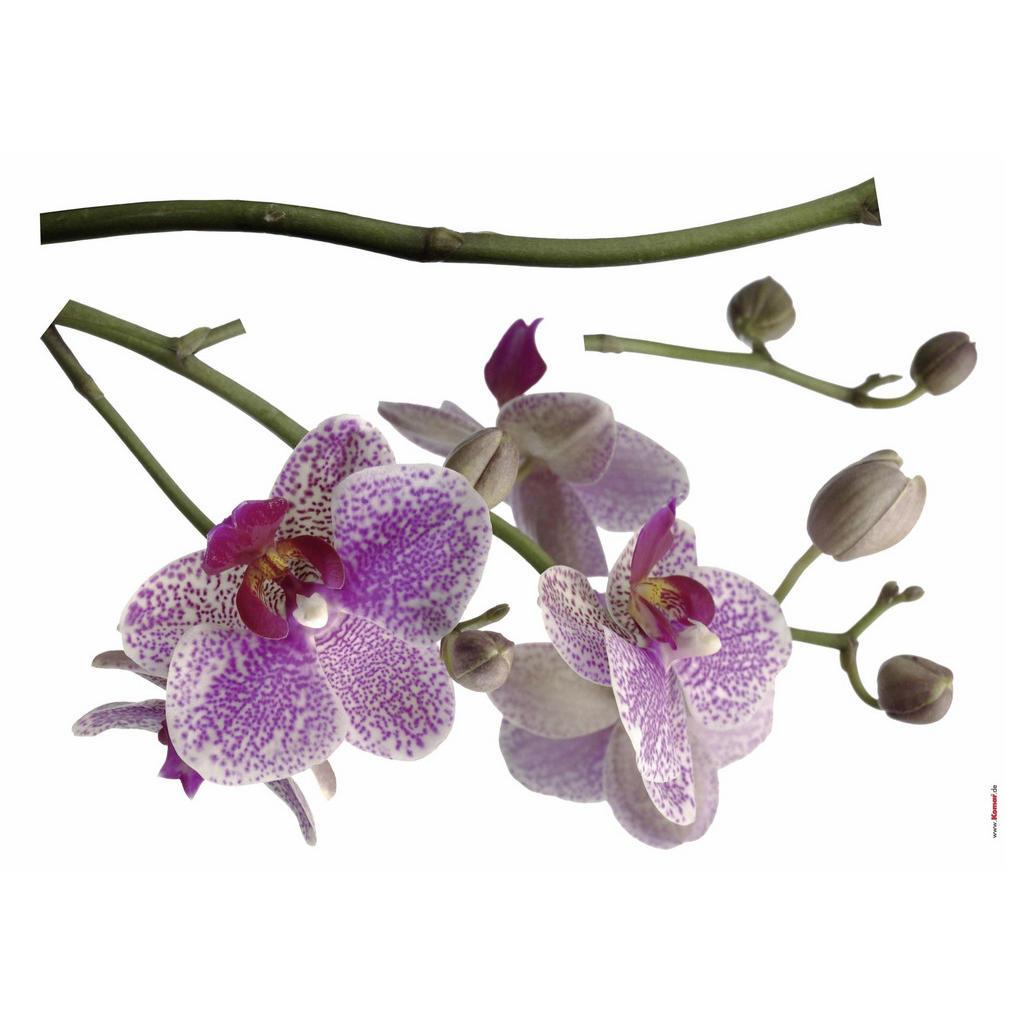 Komar Dekosticker Orchidee